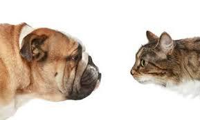 Dogs or Cats!?