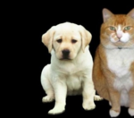 Have pet fees for rentals deterred you from getting a pet?