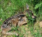 Do you typically feed wildlife?
