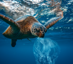 Are you concerned about ocean pollution?