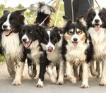 Should the city limit how many dogs or cats you can own?
