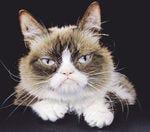 Is it cruel to declaw a cat?