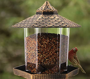 Do you have bird feeders at home?