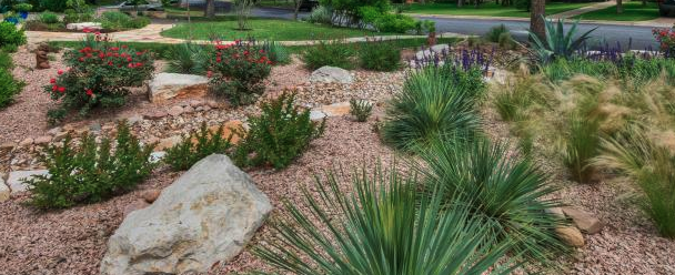 Have/are you making changes to your yard to use less water?