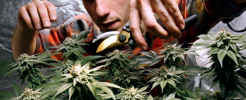Medical marijuana is here. Do you support recreational use, too?