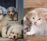 It's the day before election day. Puppies or kittens?