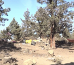 Should there be a designated homeless camp location in Bend?