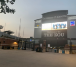 Do you plan to watch Mizzou football games in person this fall?