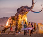 Have you ever wanted to go to burning man?