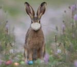 Will you be celebrating Easter with friends and family?